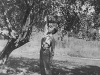 Want an apple?  Taken August 16, 1942 at Tomah, Wisconsin.  Picture of myself taking or rather trying to pick an apple from one of the apple trees (full of apples and ripe too) in a yard in Tomah.   The other picture shows me eating it  (not picked but knocked down with a bundled towel.  [Courtesy of Jan Nadamoto]