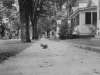 September 1942 Shot of squirrel taken at La Crosse.  Lots of squirrels around these parts found climbing up acorn tree in residential districts.  [Courtesy of Jan Nadamoto]